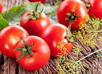 西红柿 番茄 新鲜蔬菜