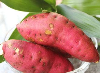 板栗红薯 约1000g 新鲜蔬菜