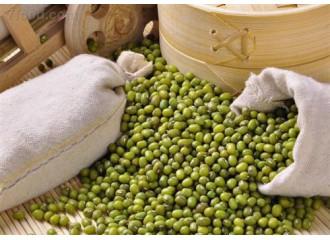 绿豆 东北明绿豆